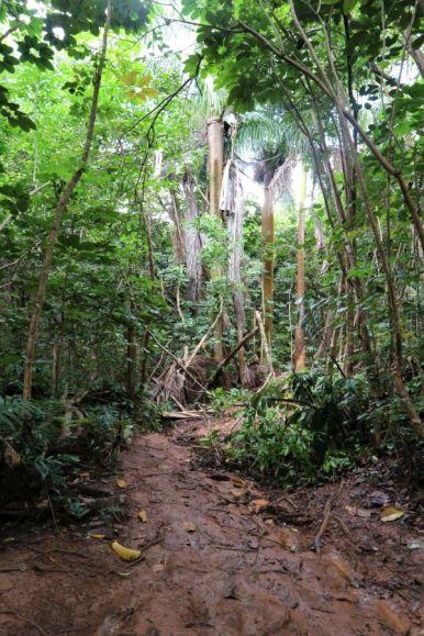 Olomana Trail (4)