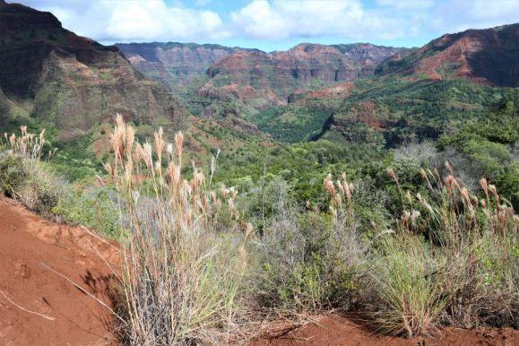 Waimea Canyon (8)