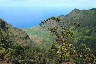 Pihea Trail Hawaii (2)