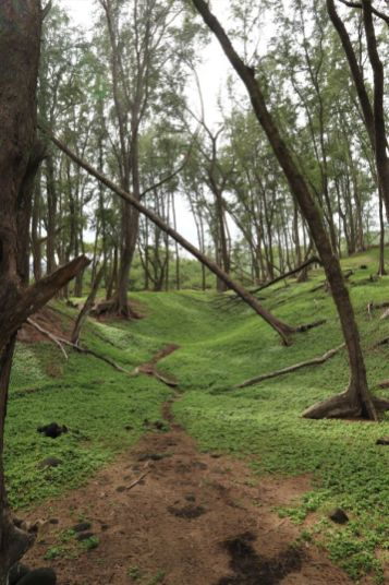 Pololu Trail Hawaii (6)