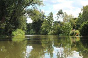 Im Wasser der Altmühl spiegeln sich die Bäume.