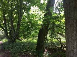 Im Wald im Müritz Nationalpark