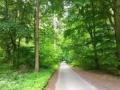 Radweg hinter Göhren-Lebbin