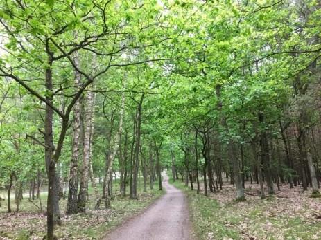 Radweg im Müritz Nationalpark