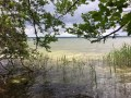 Unberührte Uferlandschaft am Kölpinsee