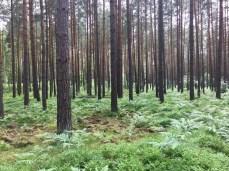 Wald im Müritz Nationalpark