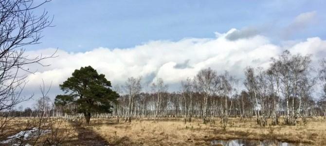 Wandern in Hamburg: Vom Wohldörfer Wald durch das Duvenstedter Brook nach Sülfeld