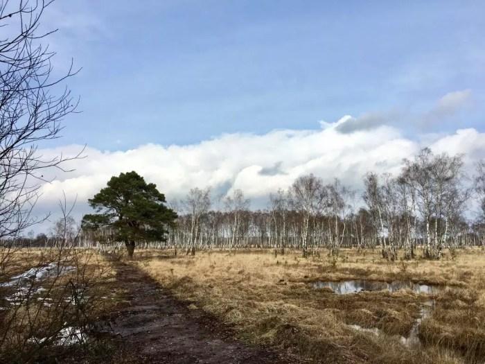 Birken und Sumpflandschaft im Duvenstedter Brook