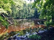 Kleiner, wilder Waldsee auf dem Gnitz