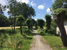 Radweg bei Püggen