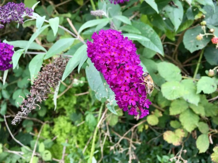 Wanderung in Hamburg: Blüte am Wegesrand