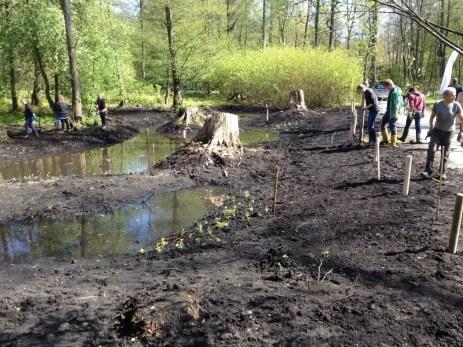 Anlegen eines Biotops 2014 im Hamburger Stadtpark
