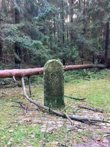Der Moisburger Stein in den Harburger Bergen - fast vom Baum erschlagen