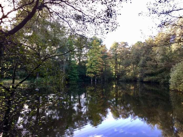 Herbst-Idylle am See im Stadtpark