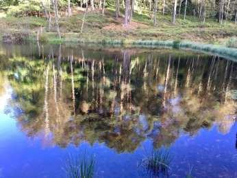 Idyllischer Teich in der Fischbeker Heide