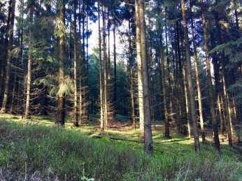 Im Staatsforst Rosengarten (Harburger Berge)