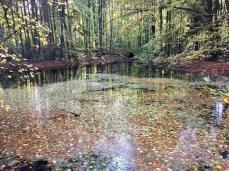 Kleiner Waldsee im Herbst