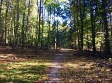 Wanderweg in der Hahnheide