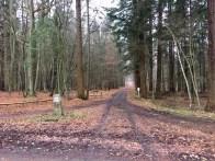 Schneller Waldweg von Wrangelsburg