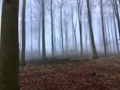 Buchenwald im winterlichen Nebel