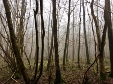 Mystisch-winterlicher Nebelwald in der Holsteinischen Schweiz