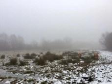 Winterliche Weide und zottelige Rinder