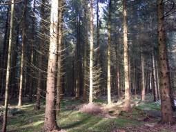 Im Stuvenwald (2)