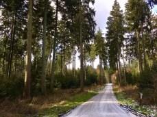 Im Stuvenwald nördlich von Buchholz