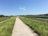 Radtour von Lauenburg nach Hitzacker - Elberadweg auf dem Elbdeich