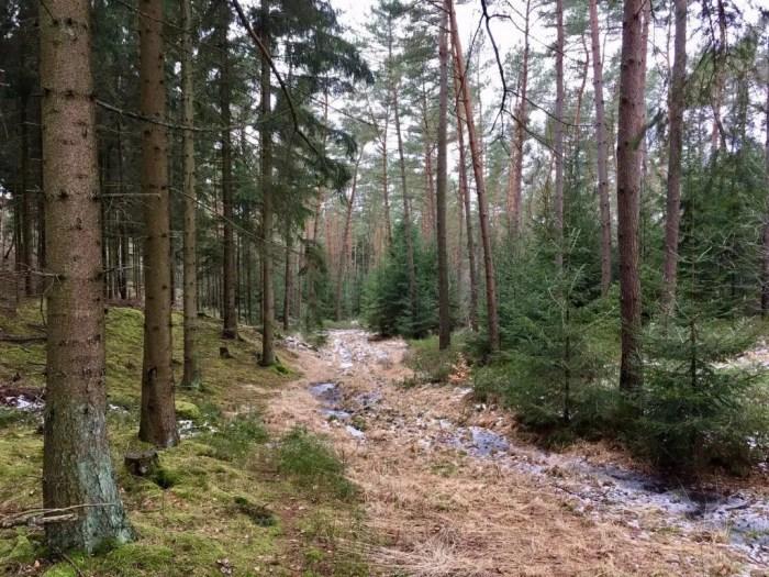 Winterlicher Bachlauf in den Harburger Bergen