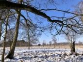 Das winterliche Duvenstedter Brook im Nordosten Hamburgs