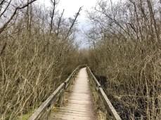 Robust: Der Holzpfad im Stellmoor-Ahrensburger Tunneltal