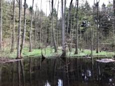 Am Hellbach bei Mölln