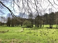 Auenlandschaft im Naturschutzgebiet Hellbachtal
