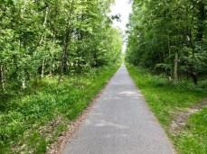 Der Radweg im Wald bei Markgrafenheide