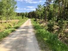 Fahrradtour auf dem Ostseeradweg - hier im Wald kurz vor Graal-Müritz