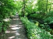 Wie in einem grünen Tunnel: Radweg neben der Tarpenbek