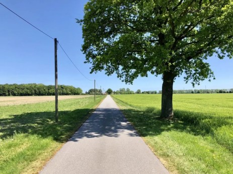 Radweg auf der Landstraße bei Bisdorf