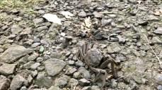 Eine Krabbe auf dem Wanderpfad im Heuckenlock