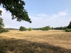 Heidelandschaft nahe des Lagerplatzes Häckeberga am Skåneleden