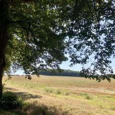 Landschaft an der Allee nach Krummin auf Usedom
