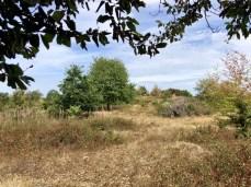 Landschaft kurz vor dem Ziel Knivsåsen
