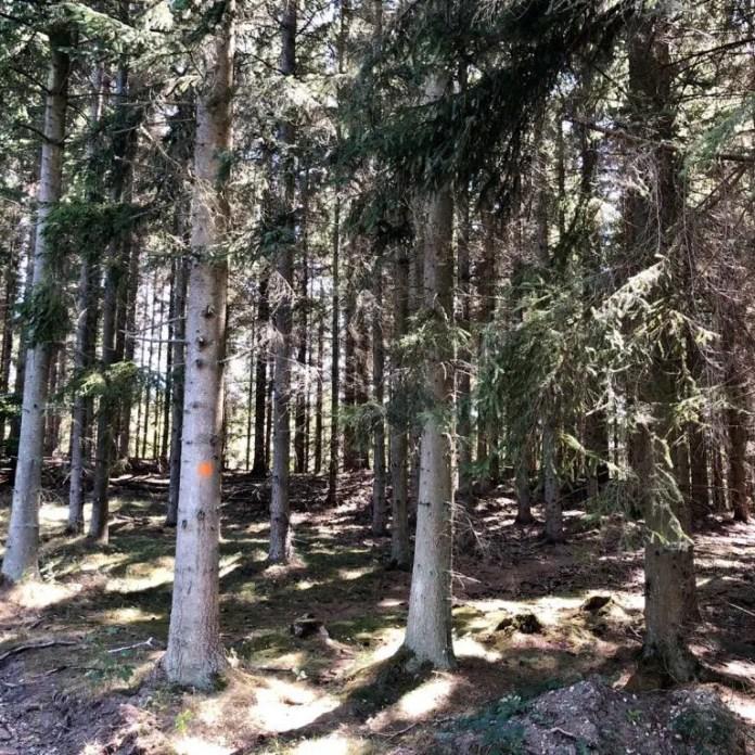 Wanderung Auf Dem Höhenweg Und Durchs: 4 Tages-Wanderung Auf Dem Skåneleden In Südschweden