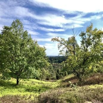 Blick in den Totengrund in der Lüneburger Heide bei Wilsede