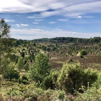 Wandern in der Lüneburger Heide: Blick über den Totengrund bei Wilsede