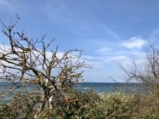Sträucher am Strand bei Rerik