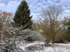 Im Wald des Naturschutzgebietes Raakmoor