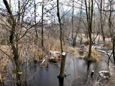 Schaurig-schöner Bruchwald im Raakmoor