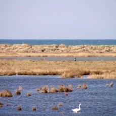 Hirsche auf der Nordspitze des Darß im Nationalpark Vorpommersche Boddenlandschaft