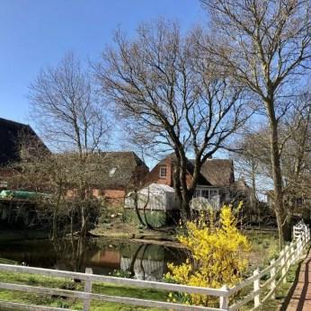 Kleiner Dorfteich auf Hanswarft auf Hooge